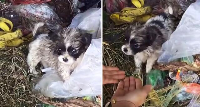 La historia del perrito conmovió a miles en TikTok.
