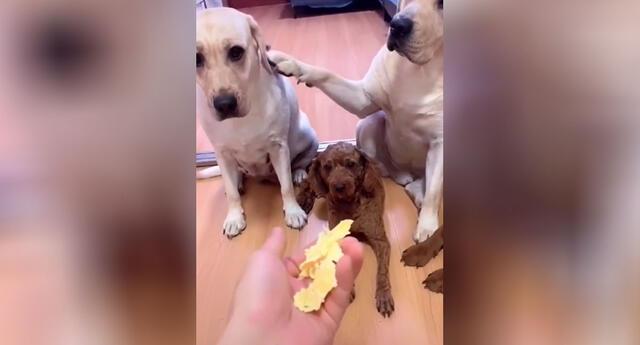 Los perros se volvieron tendencia en TikTok.