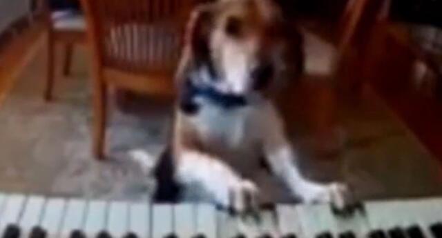 El perrito asombró a todos en las redes sociales.