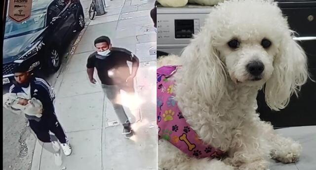 Vecinos denuncian a delincuentes que se dedican a robar perros en La Victoria
