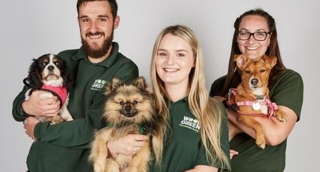 Adoptar una mascota: Consideraciones a tomar antes de hacerlo