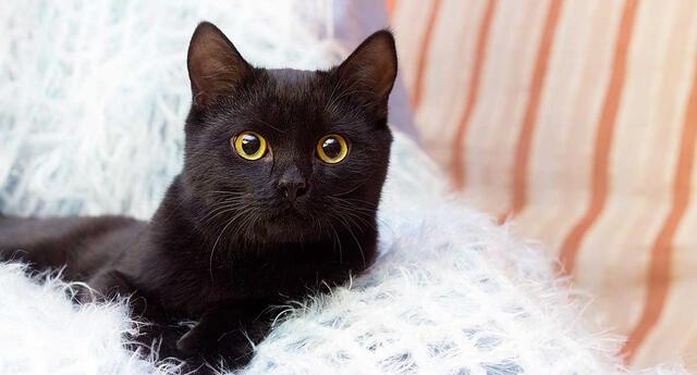 Los gatos en los sueños son símbolo de nuestra capacidad intuitiva.