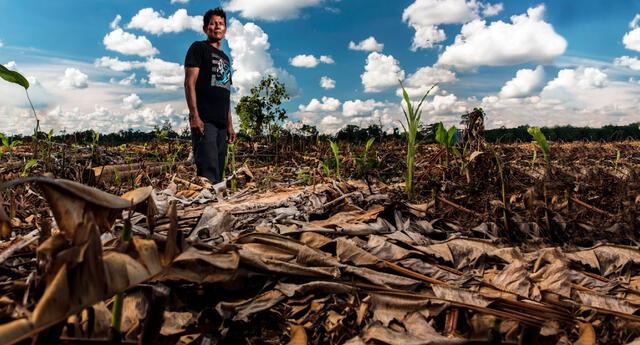 En los últimos siete años 12 líderes defensores del medio ambiente fueron asesinados solo en la Amazonía y cuatro de ellos fueron atacados en pleno estado de emergencia por la pandemia.
