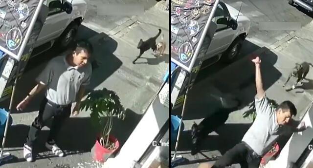 Peculiar video del empleado y los perros se viralizó en las redes sociales.