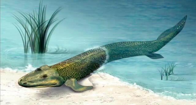 El contenido biológico de la Era Paleozoica es bastante rico, comprende numerosas formas de vida acuática.