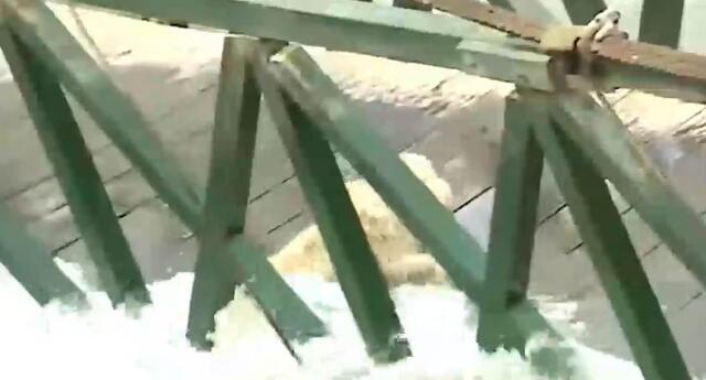El perrito iba cruzando el puente con su dueña pero fue arrastrado por el caudal del río.