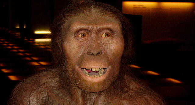 Según National Geographic, Lucy, la Australopithecus, murió al caerse de un árbol.