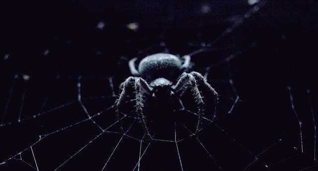 Si sueñas que una araña pica a otra persona, significa cometiste un error .