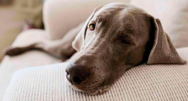 La colitis es una enfermedad intestinal que daña el colon de tu mascota.