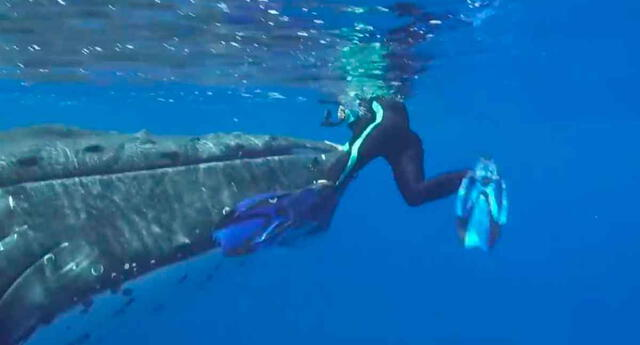 Ballena salva a mujer de un tiburón.