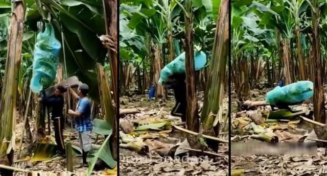 Peculiar video de la caída del trabajador se viralizó en las redes sociales.