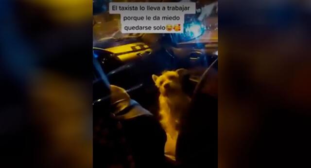La joven se percató de la presencia del perrito cuando subió al taxi.