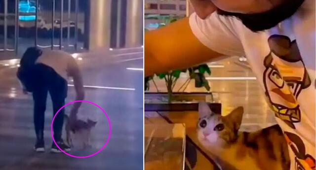 El joven se ganó la confianza de la gatita.