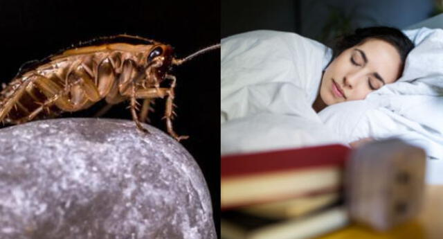 Interpretación de sueños: ¿Qué significa soñar que matamos cucarachas?