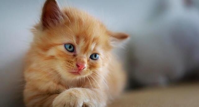 Entérate qué significa soñar con gatos.