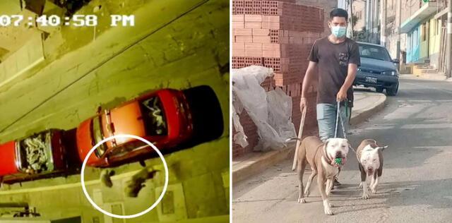 Cámara muestra el momento del ataque del pitbull. Al lado, el dueño de los canes que los pasea sin bozal.