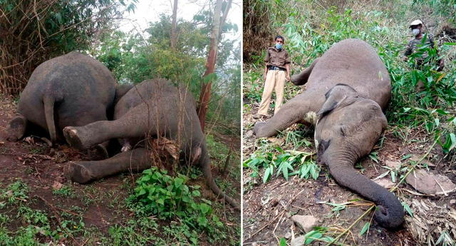 Las autoridades han iniciado el recojo de los cuerpos de los 22 elefantes.