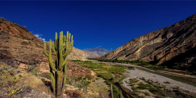 Los Bosques Secos del Marañón son la tercera área de conservación regional de Cajamarca