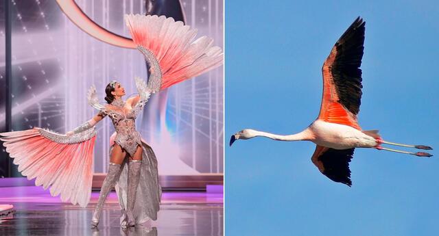 Izq. Janick Maceta en el Miss Universo 2021. Dcha. La parihuana, ave considerada en peligro de extinción por la legislación nacional.