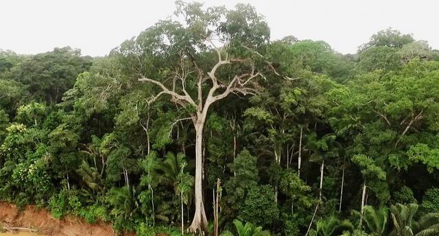 El objetivo es proteger los ecosistemas y seres vivos que día a día se ven afectados por la mano del hombre.