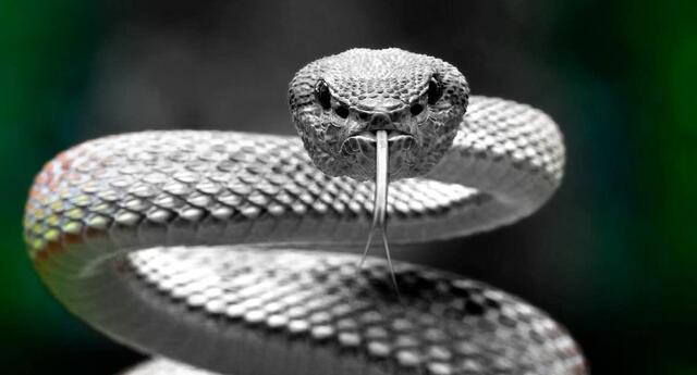 Si soñaste alguna vez con una serpiente, pues conocerás que es lo que te depara el destino.