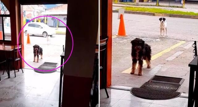 La conmovedora historia del perrito y su amigo se hizo viral en Internet.