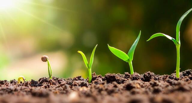 Partes de las plantas y su función en el medio ambiente