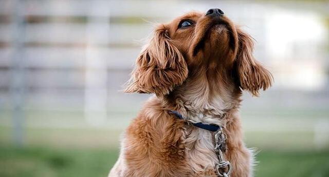 Conoce todo lo que debes saber sobre la educación de los perros.