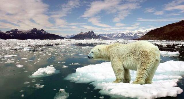 """""""La tarea es colosal. Tenemos que replantar y proteger nuestros bosques, limpiar nuestros ríos y mares y hacer más verdes nuestras ciudades"""", señaló Guterres."""