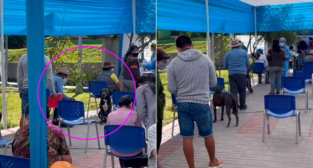 El perrito se sentó junto a su dueño y esperó a que lo vacunen.