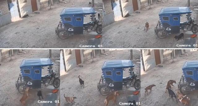 Peculiar video de los perros se hizo viral en las redes sociales.