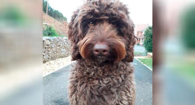Digby es un perro que ayuda a los bomberos en las sesiones de terapia a lidiar con el trauma.