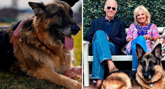 Joe Biden y su familia están de luto por la muerte de Champ.