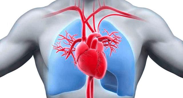 Conoce AQUÍ qué es y cuales son  las partes del sistema circulatorio