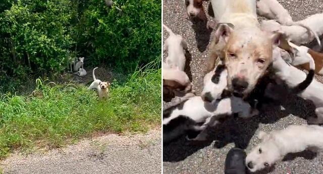 La perrita y sus bebés fueron rescatados gracias a un joven.