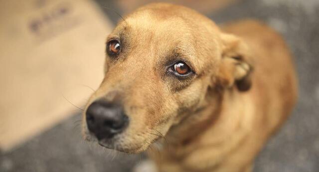 Congreso aprobó por mayoría proyecto de ley en beneficio de los perros y gatos del país.