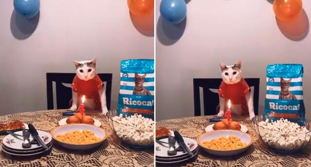 El gatito celebró su cumpleaños en compañía de su familia.