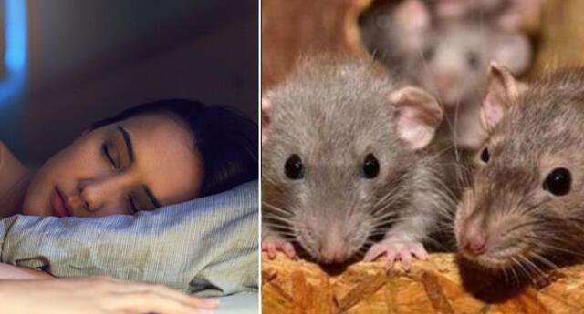 ¿Qué significa soñar con ratas vivas y grandes? ¿problemas familiares?