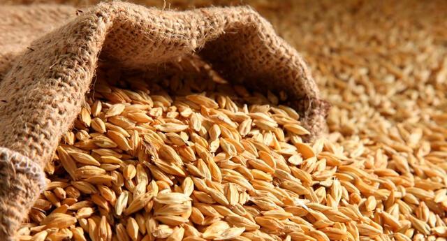 La cebada disminuye el hambre en gran medida a través de su alto contenido de fibra.