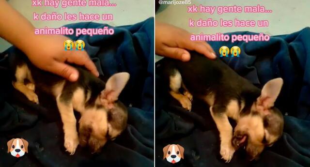 El perrito fue rescatado por un joven.