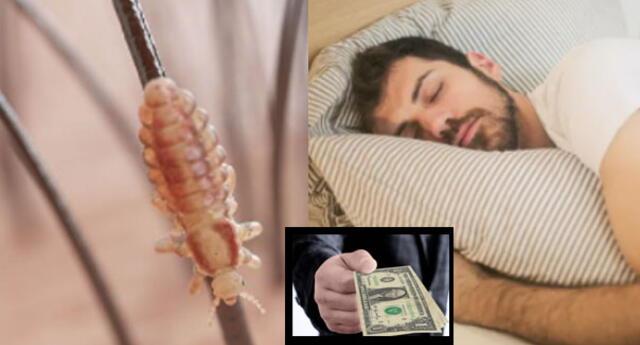 ¿Qué significa soñar con piojos y matarlos? ¿Recibiré dinero?