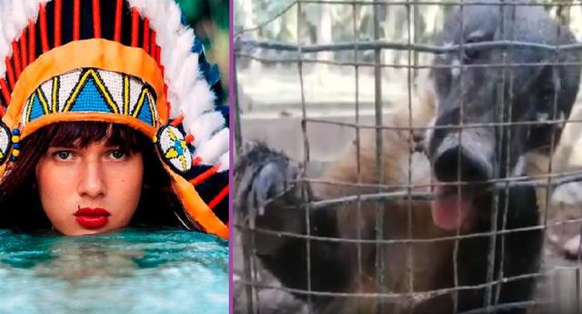 La Uchulú pide apoyar a los animales silvestres.