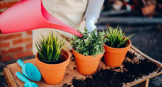 Las plantas en maceta necesitan un cuidado diferente.