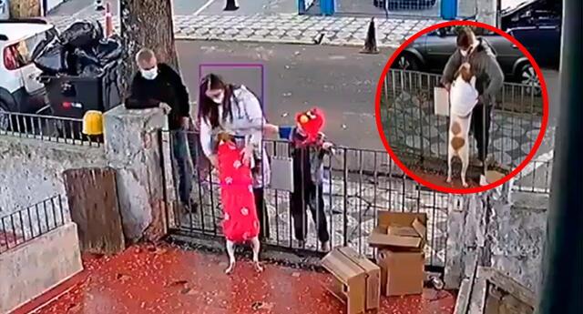 El perrito, imaginándose que lo traía para él, se acomodó y permitió que la mujer lo vista y le acomode el abrigo.