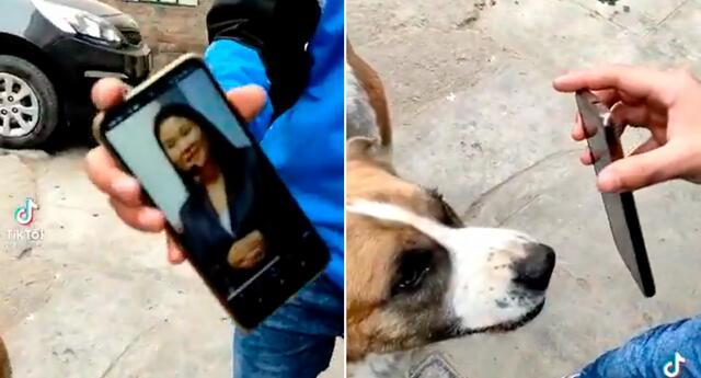 El perrito sorprendió con su reacción.