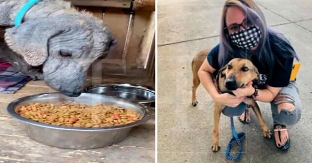 El pequeño can fue llevado al medico y poco a poco logro salir adelante hasta lograr su recuperación.