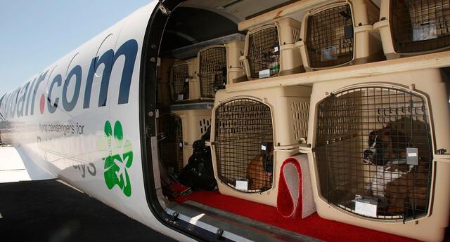 Desde este mes de julio vetan la entrada de canes peruanos.