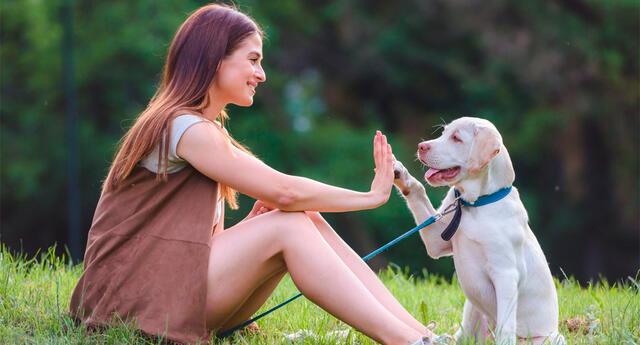 El vínculo especial entre los perros domésticos y los seres humanos es innegable.