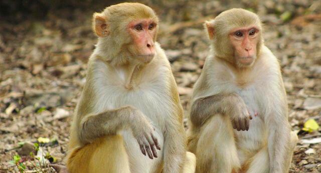 El veterinario se contagió después de disecar dos monos muertos a inicios de marzo, según medios estatales.