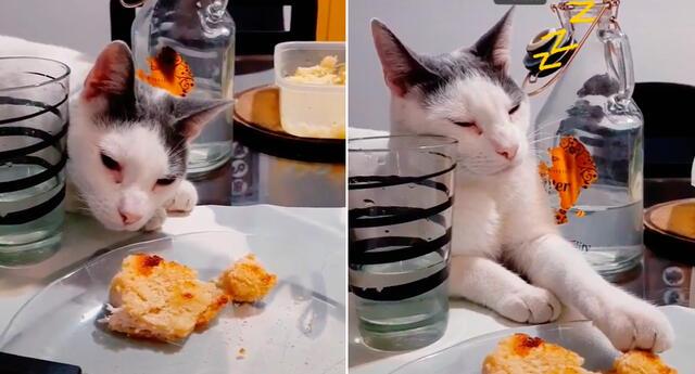 El felino fingió estar dormido sobre la mesa.